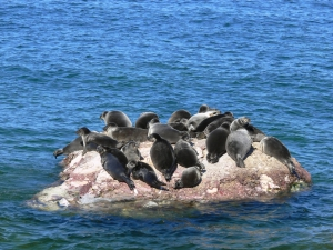 Excursion & quot; To the ravine of the Baikal seal - Ushkanye Islands & quot;